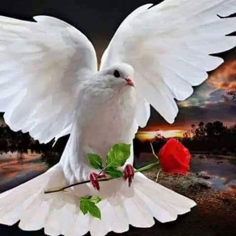 Muita Paz!!!
