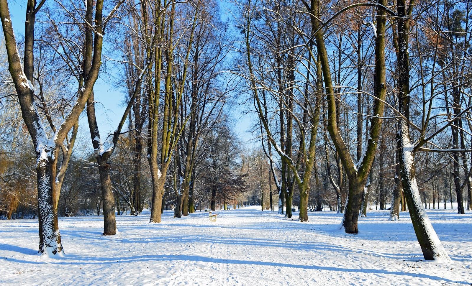 Zima Park Wschodni Wrocław