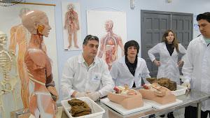 Docência de Anatomia Humana