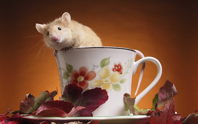 Best Jungle Life mouse, cup, wallpaper