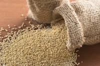 quinua grano de oro de los Andes