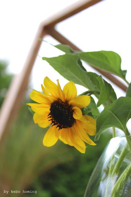 Sonnenblumen in Herbstdekoration, die Blumen am Freitag auf dem Südtiroler Lifestyleblog kebo homing, Fotografie und Styling