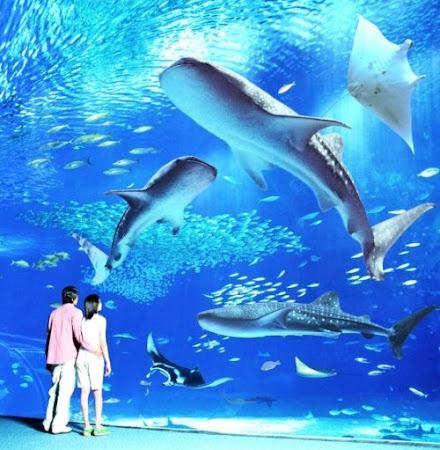 Kuroshio Aquarium, Okinawa Japan