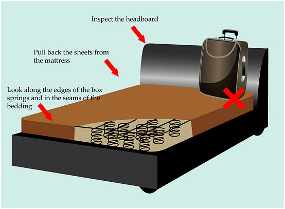 Bed Bugs Inside Laptops