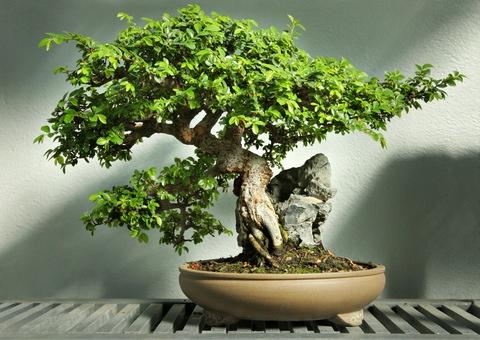 как сделать дерево из бисера и проволоки схема