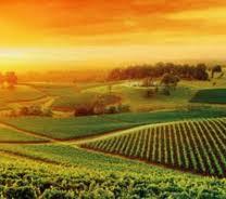 Una zona vinícola Turística en Australia