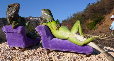 Funny Lizards - Relax like Lizards, Amazing Photos...