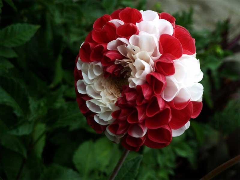 Floresyflores cesto de pinzas decorado con flores for Las plantas mas bonitas