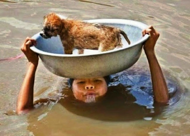 #23. This woman loves her puppy so much she carried him across deep flooded waters. - 24 Happy Animal Photos Made Possible By The People Who Saved Them.