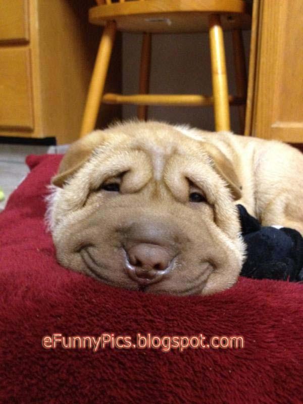 A Dog Smiles