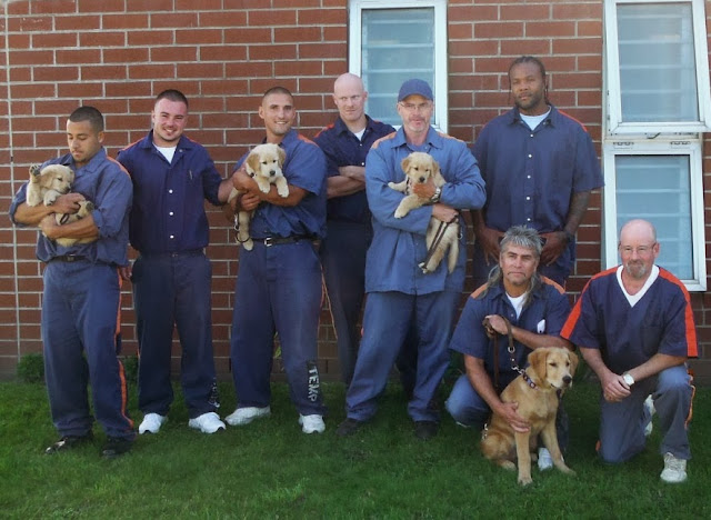 Six men stand and two men squat in front of a brick wall with two windows. Three of the men standing are holding small golden retriever puppies, one of the men squatting has an bit older golden retriever sitting in front of him.