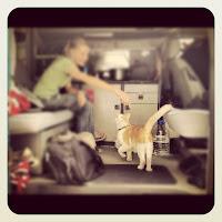 Stray Cat in VW Van Istanbul