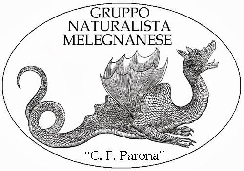 "GRUPPO NATURALISTA MELEGNANESE ""C. F. Parona"""