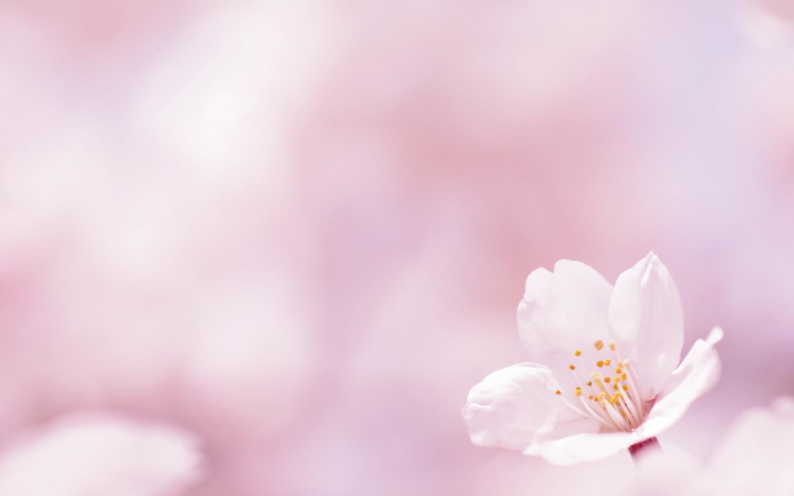 ... de escritorio gratis, imagenes fondo escritorio: Flor de Primavera