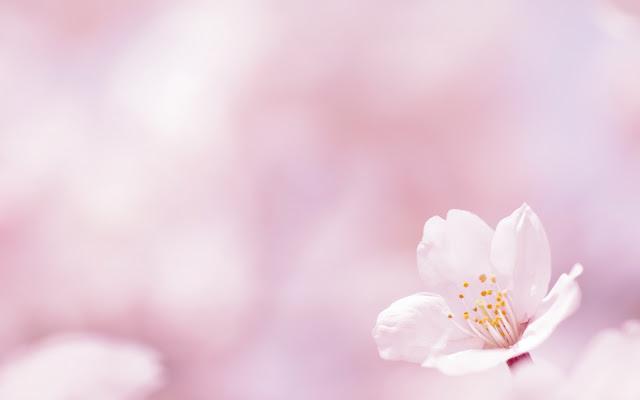 Flor de Primavera Fondos de Pantalla HD de Flores