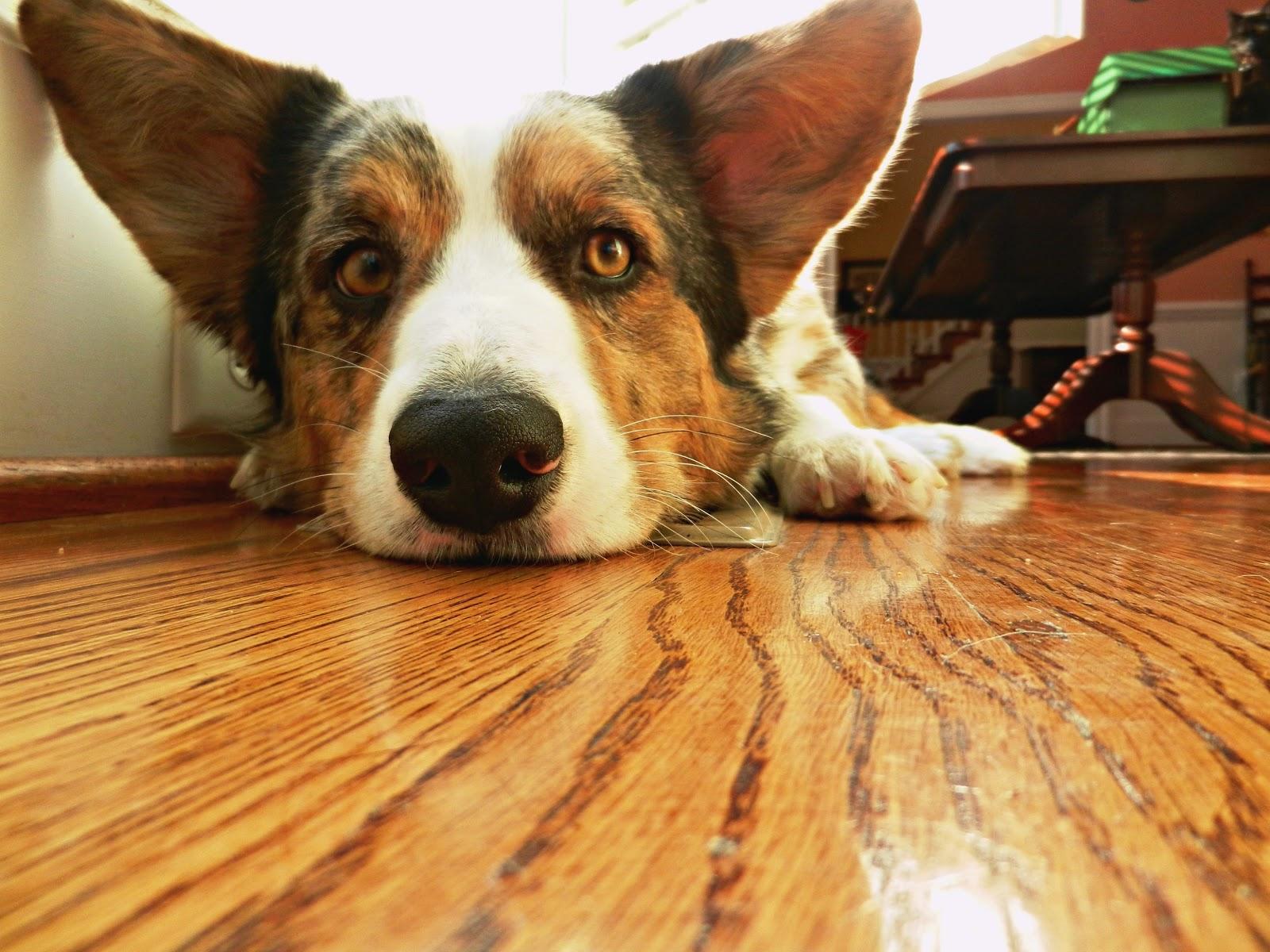 Sunbeam Smart Dog Clipper Set Reviews