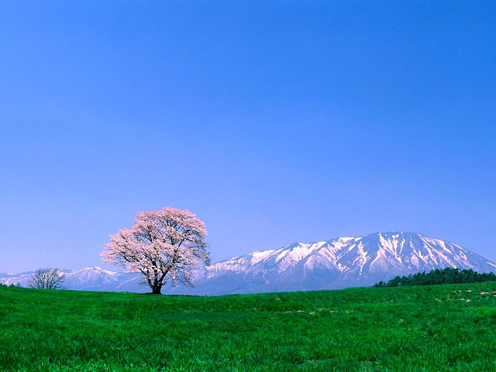 http://2.bp.blogspot.com/--odep94kODE/T8KwoujvkZI/AAAAAAAAA6I/yNl6eZ9DUms/s1600/fuji-mountain-wallpaper1024x768+-+Copy.jpg