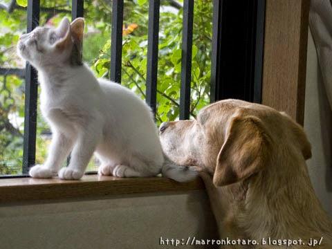 仲良く外を眺める仔猫と大型犬