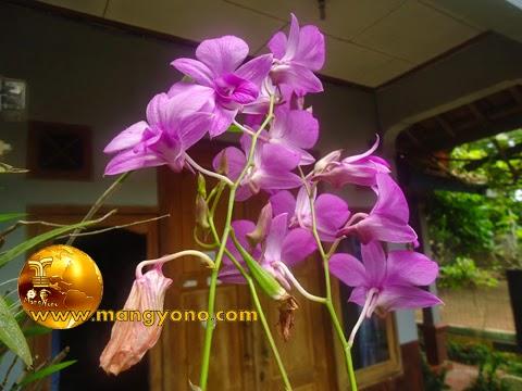 Awal menyukai dan menanam bunga Anggrek