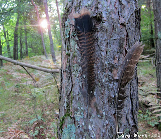 turkey feathers, camp marker, michigan, national forest