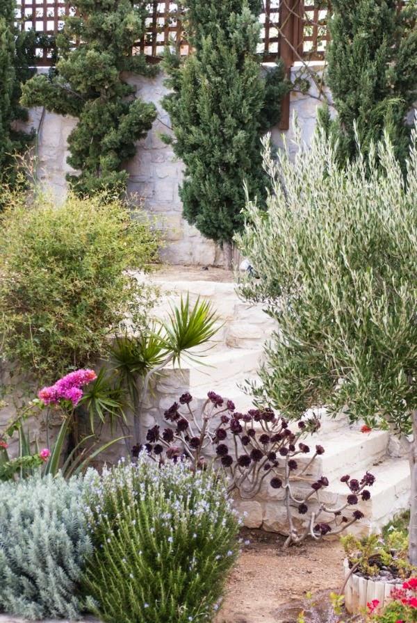 T picamente mediterr neo guia de jardin for Plantas jardin mediterraneo