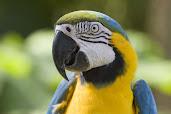 #7 Parakeet Wallpaper