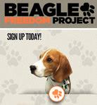 Proyecto beagles libres