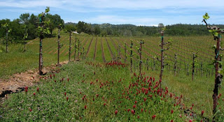 Sierra Foothills Wineries
