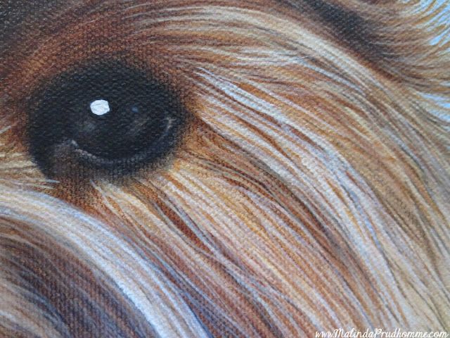 lola, dog, yorkie, yorkshire terrier, pet portrait, portrait, dog portrait, puppy, pet art, oil painting, realism, animal art, yorkie painting, custom pet painting, custom pet art, toronto portrait artist