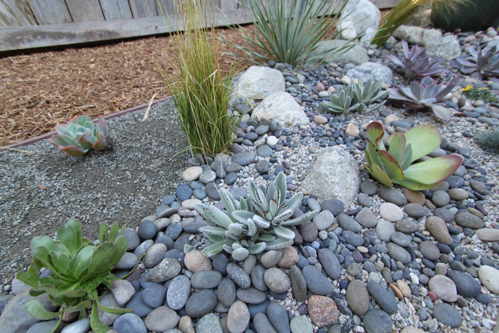Modern Landscaping With Succulents : Landscaping a mid century modern home