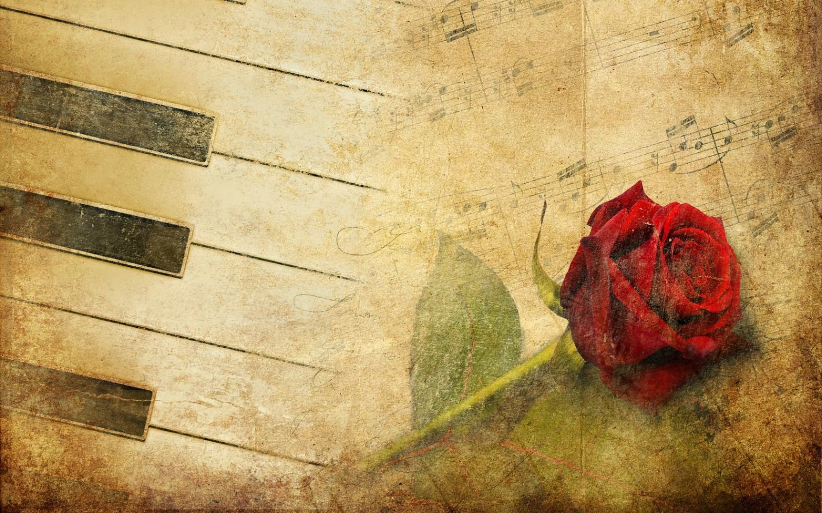 Maroon-Rose-with-piano-keyboard-keys-art-Template-image-HD-download.jpg