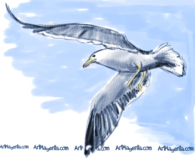 Lesser Black-backed Gull is a bird sketch by illustrator Artmagenta