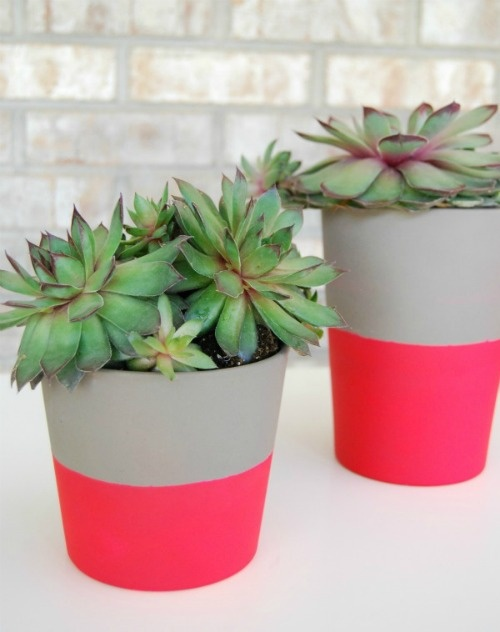 Succulents in DIY pot