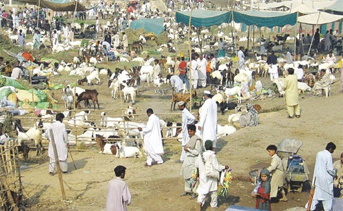 Bakra Mandi Lahore
