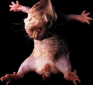 Funny Naked Mole Rat