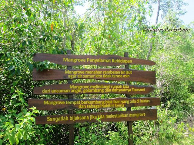 Hutan Mangrove sepanjang perjalanan