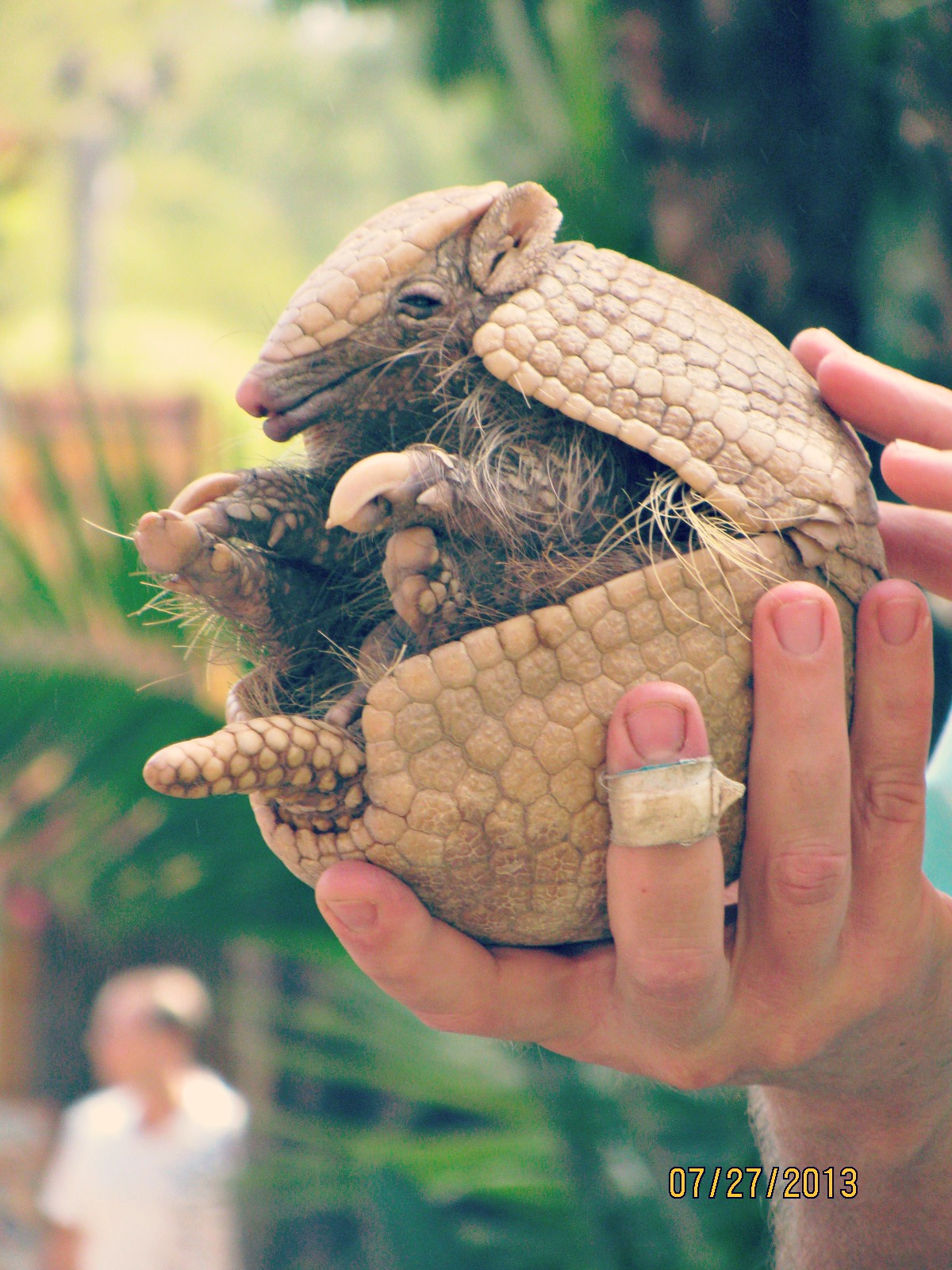 San Diego Safari Park // Sleepy Armadillo