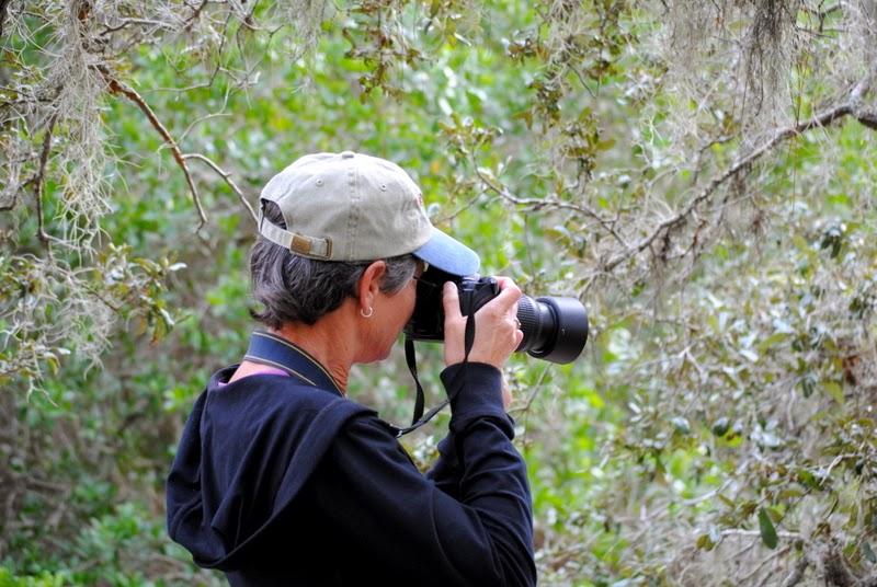 Osprey Fl Homes also South Creek Trail Landscapes At Oscar together with Ospreynokomisflorida furthermore Oscar Scherer moreover Oscarschererstatepark. on oscar scherer state park osprey florida