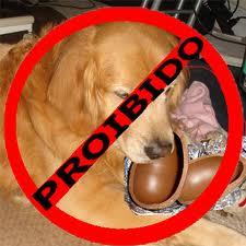 chocolate proibido para cachorro