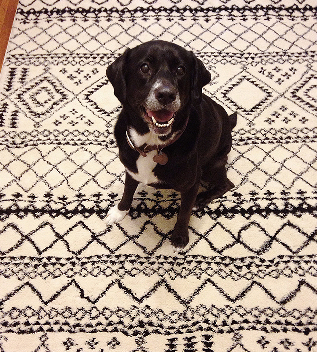This rug is doggy-approved!