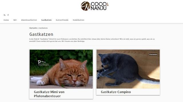 Katze Mimi als Gastkatze beim Katzenblog von Coco und Nanju