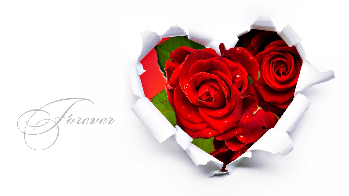 Rose Love Animation