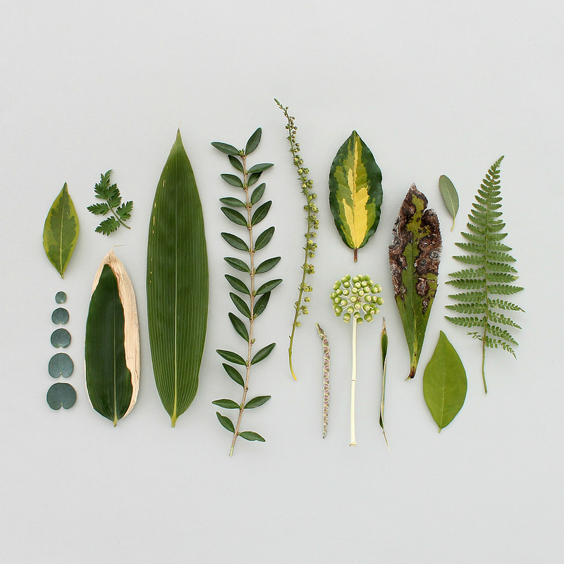 collected treasures - green finds