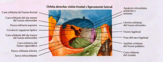 Anatomia Lic. En Terapia Ocupacional: abril 2015