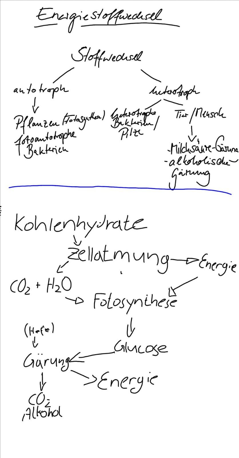 Bio-Blog: Energiestoffwechsel & ATP