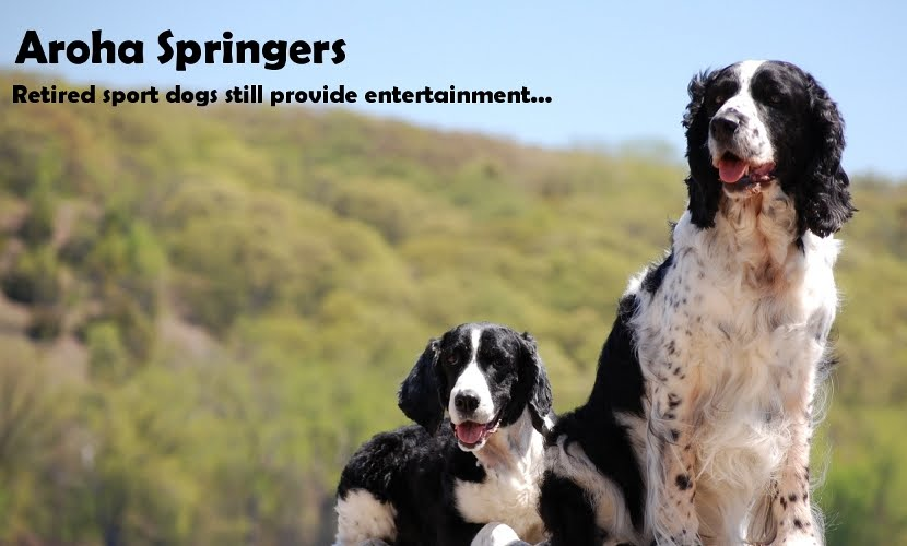 Aroha Springers