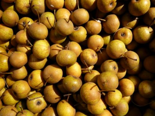 http://2.bp.blogspot.com/--s1hzQMF8eE/UG3pHHfs58I/AAAAAAAAAQk/2fCUqIANt9U/s1600/pera+volpina+frutti.jpg