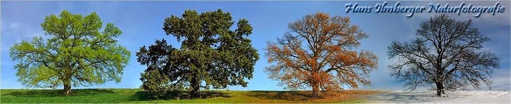 Hans Ilmberger Naturfotografie