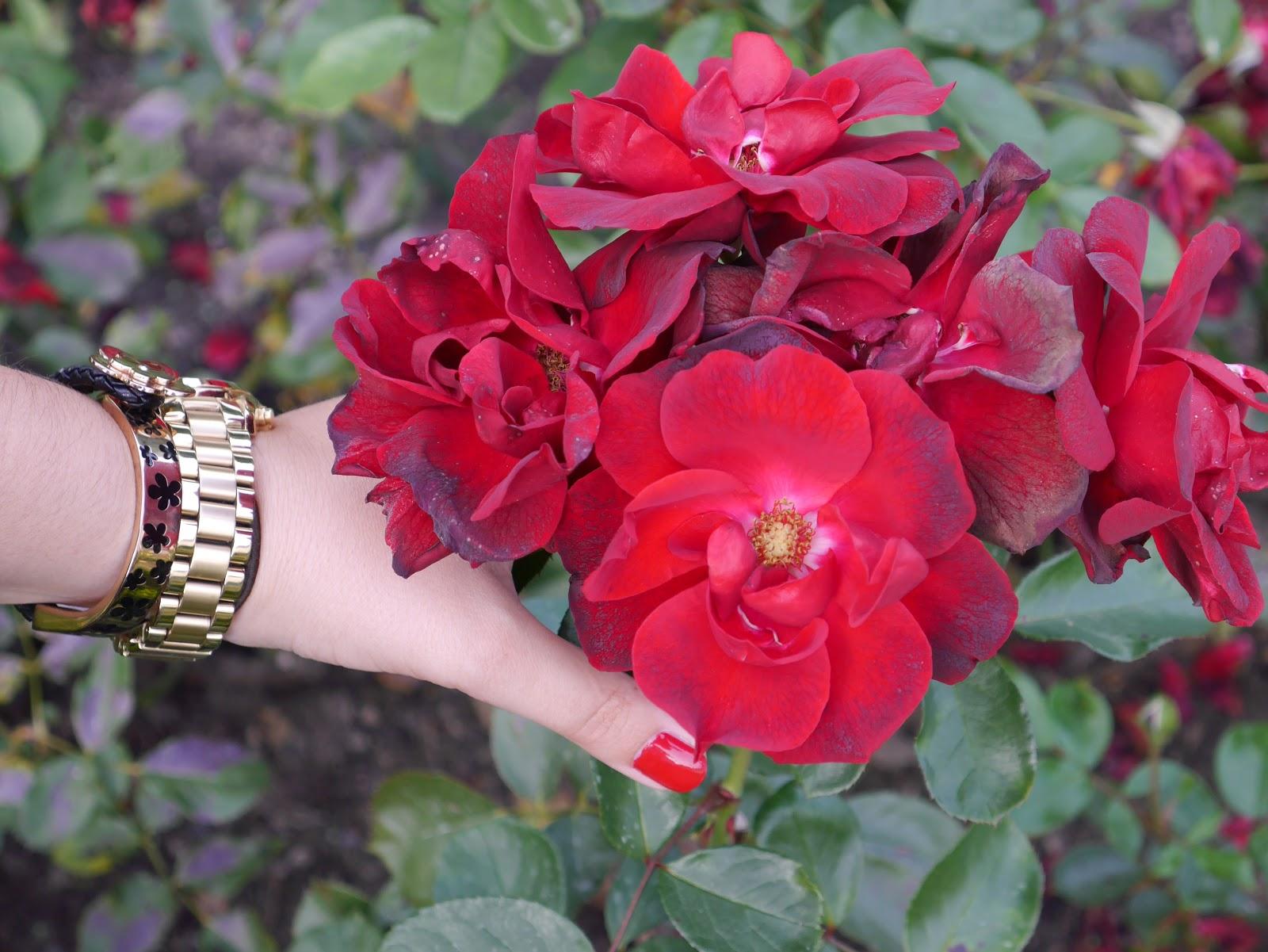 Barmberg, Rosen Garten