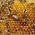 Hikmah Lebah - Madu & Hasilnya